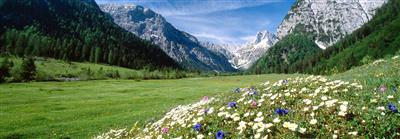 Flower meadow with mountains in the background